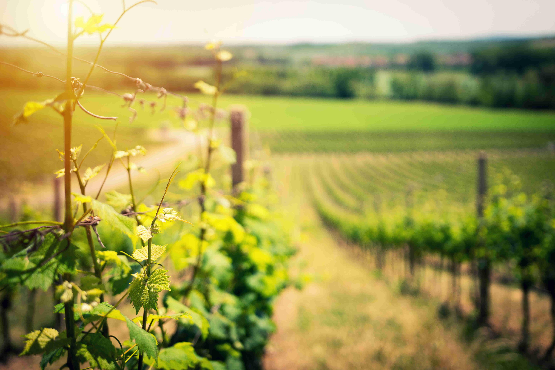 form-viticulturte